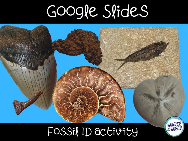 Google Slides fossil identification activity