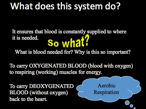 Circulatory System - P.E Presentation
