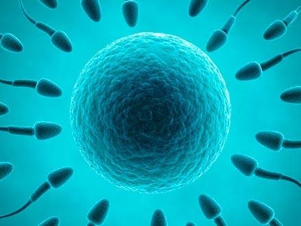 Reproductive Organs, Becoming Pregnant, Gestation & Birth, and Growing Up.