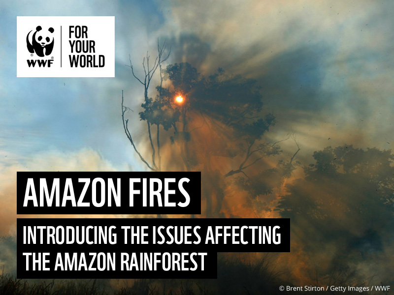 Amazon Forest Fires - Classroom Presentation