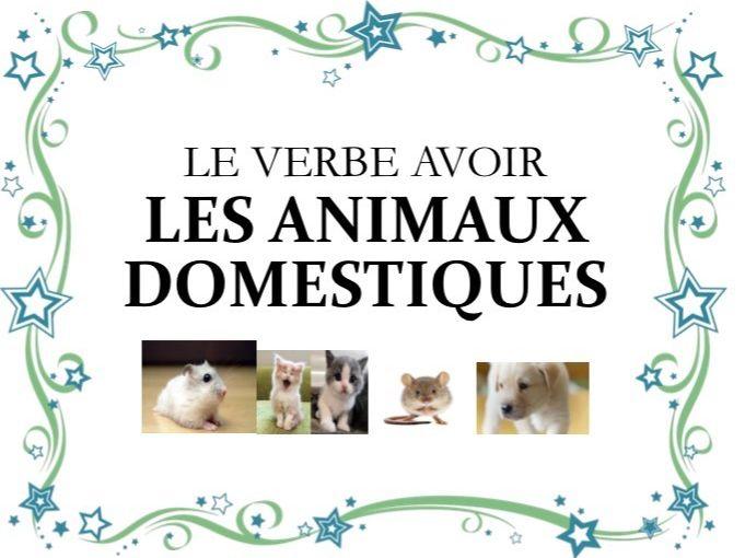 le verbe avoir et les animaux domestiques