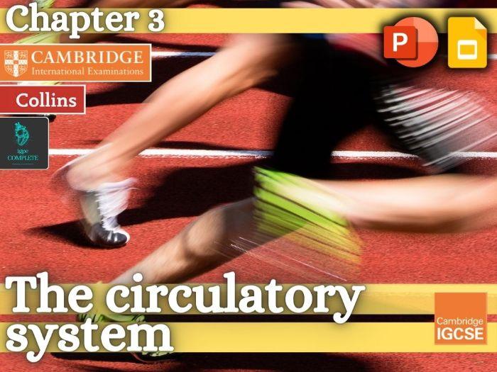 IGCSE / GCSE  PE - CIRCULATORY SYSTEM - Anatomy and Physiology - full teaching resource