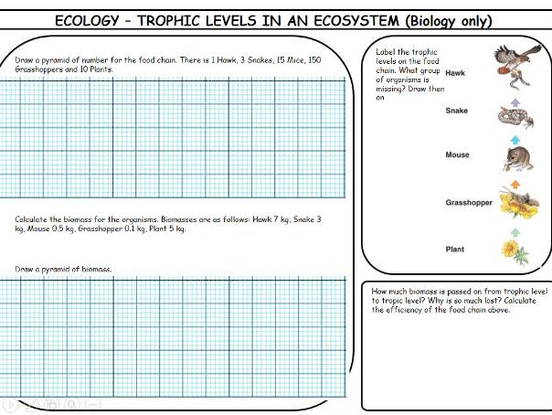 New spec AQA biology revision mats, Ecology topic.
