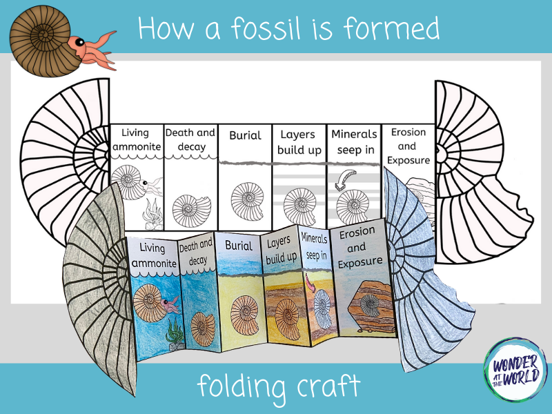 How a fossil is formed folding craft KS2
