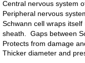Edexcel A Level Biology Topic 9 Control Systems Nervous System