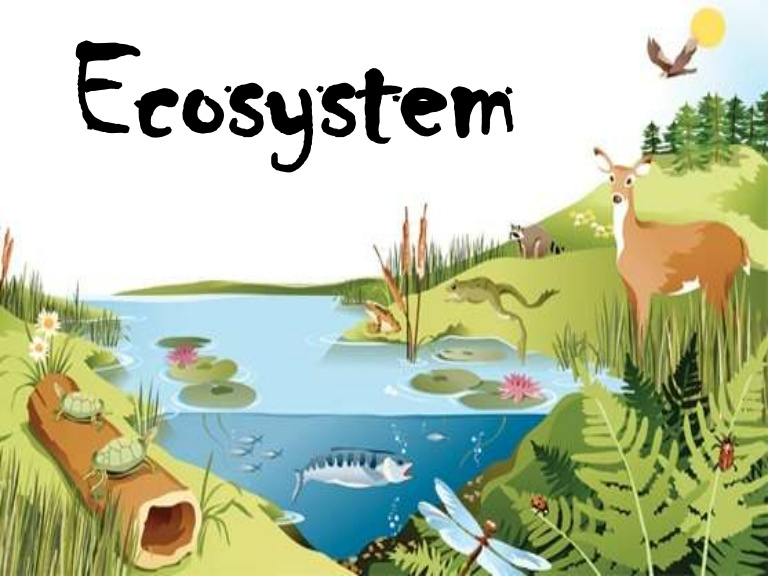 An Introduction To Ecosystems Food Chains And Food Webs