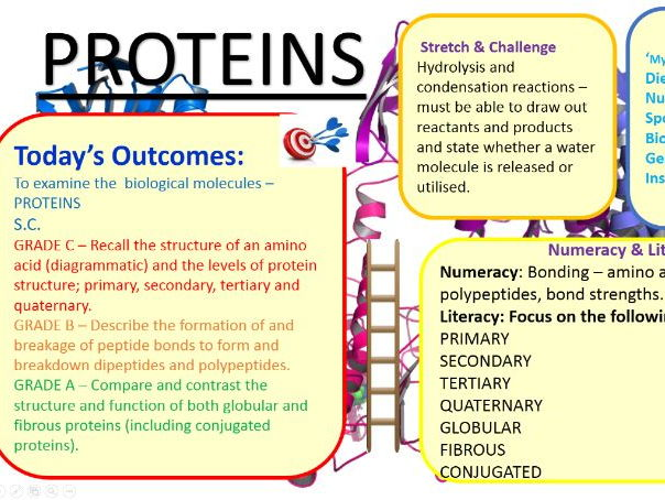OCR (from 2015) Module 2.2 - Proteins