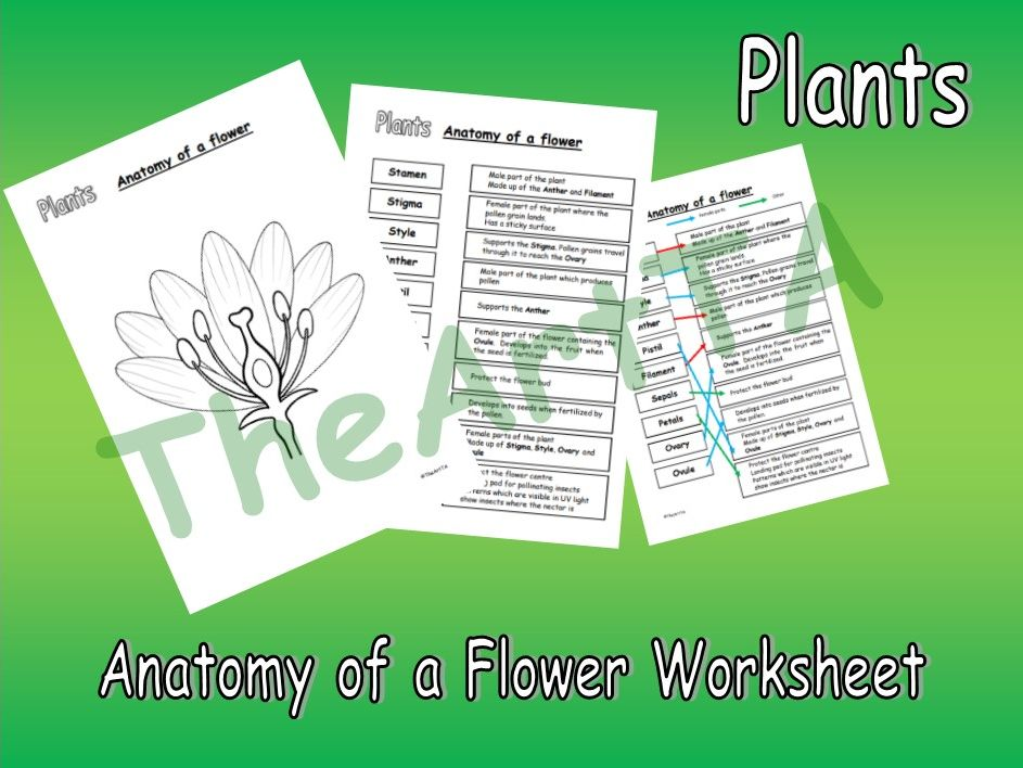 Anatomy of a Flower Worksheet
