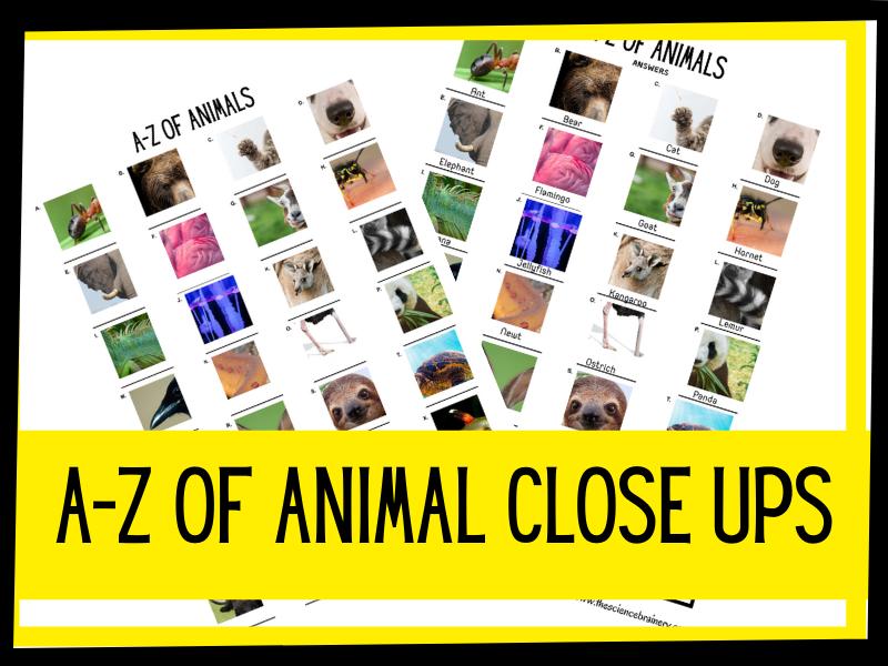 KS1 A-Z of animal close ups