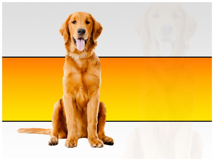 Beautiful dog powerpoint template by templatesvision teaching cover image toneelgroepblik Choice Image