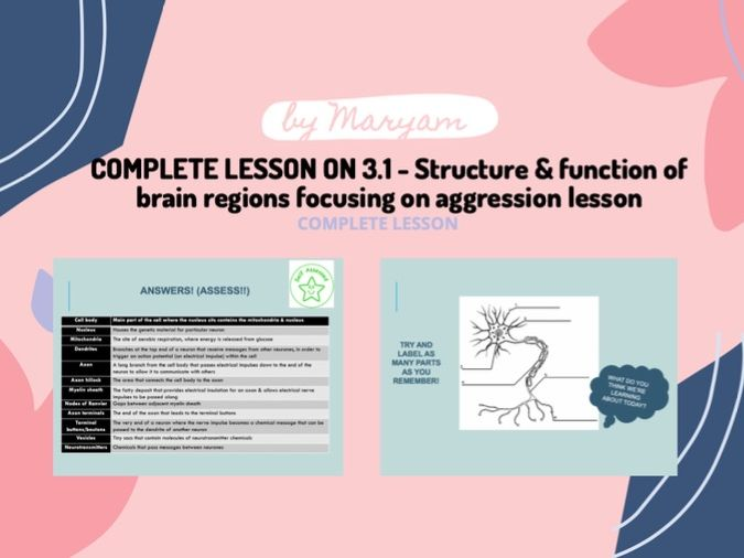 Psychology Edexcel: 3.1 - Structure & function of brain regions focusing on aggression lesson