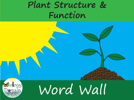 Plant Structure and Function Word Wall Vocabulary Cards