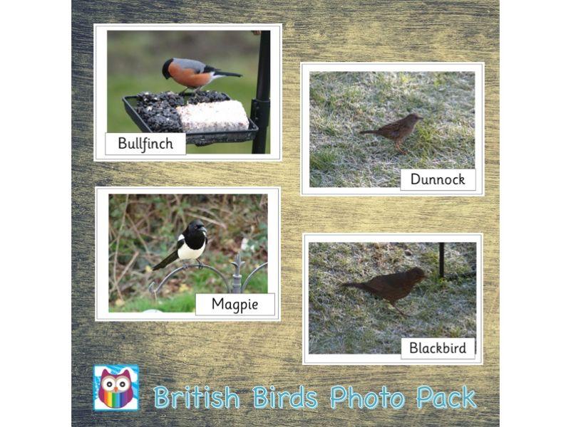 British Birds Photo Pack