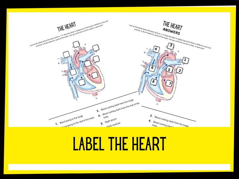 Label the Heart worksheet | KS2 | Primary Science | Distance learning
