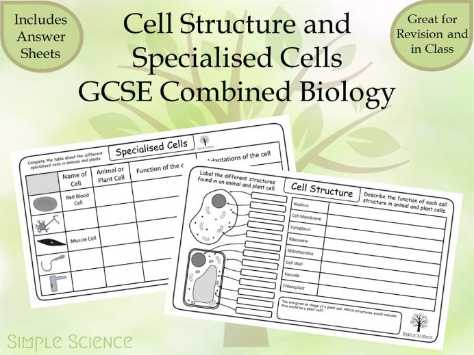 GCSE Biology - Cell Structure and Specialised Cells Worksheets