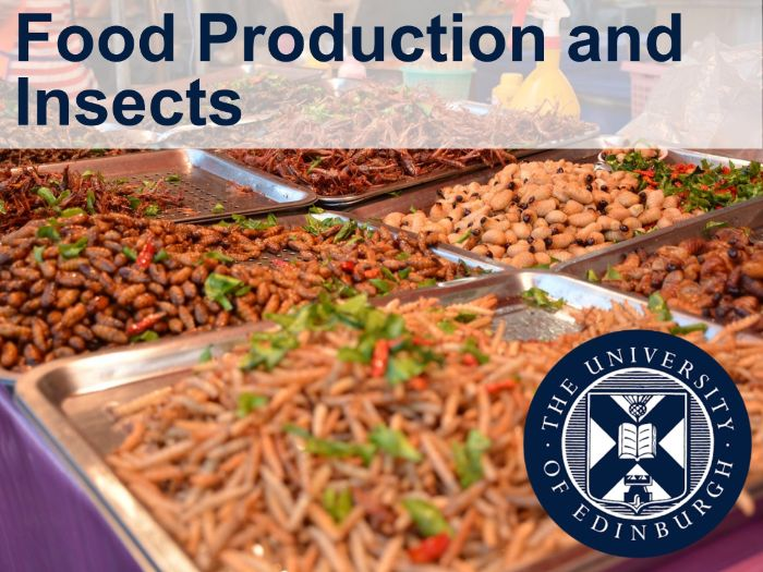 Food Production and Insects (Interdisciplinary Learning)