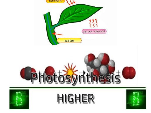 B2: Organisms and energy - Photosynthesis and Sampling Techniques (Edexcel)