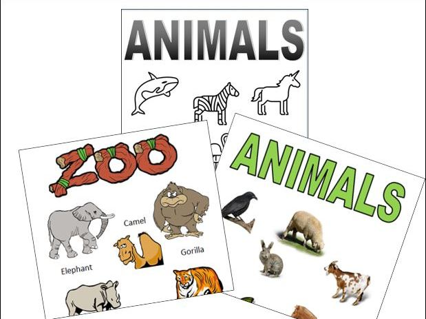 6 Animal Posters