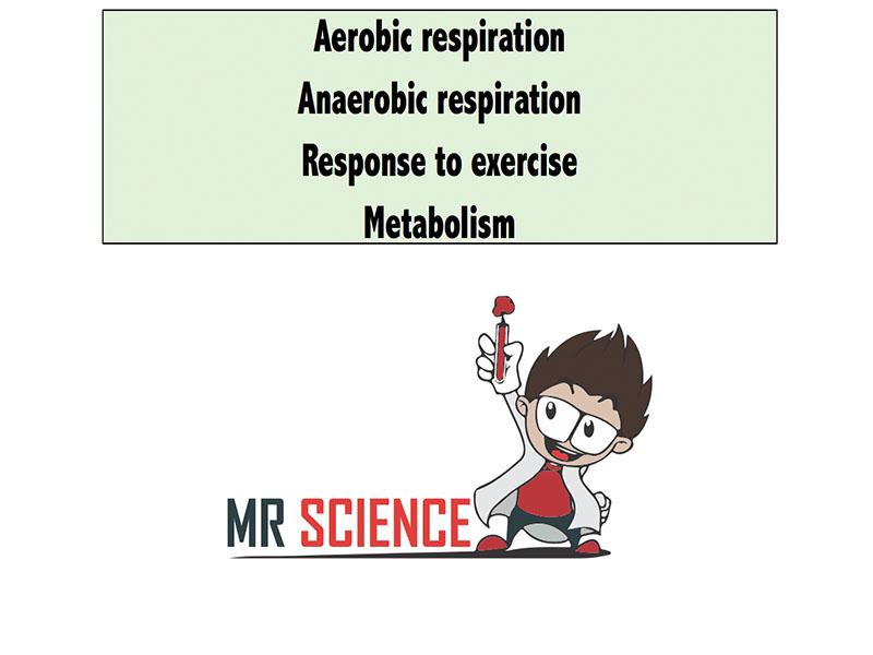 AQA B9 Respiration