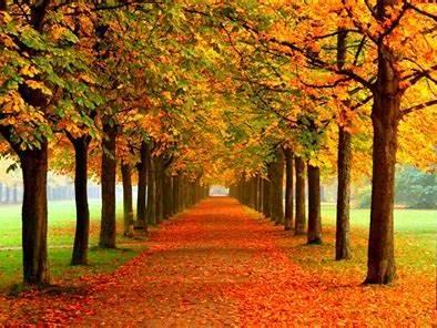 Autumn Creative Writing Lesson - Sensory Language - High Level Vocabulary