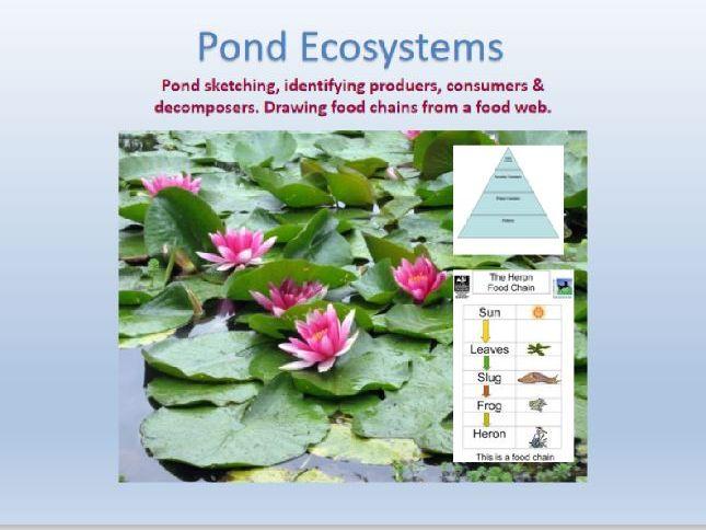 understanding Pond Ecosystems
