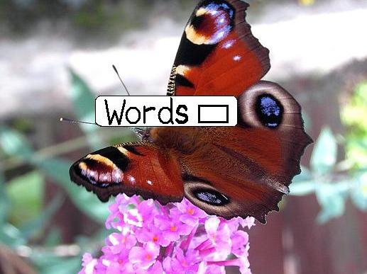BUTTERFLY Picture with Word Gaps + Word Bank