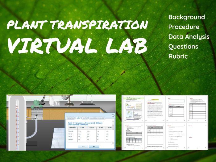 Plant Xylem Transpiration Virtual Lab Simulation