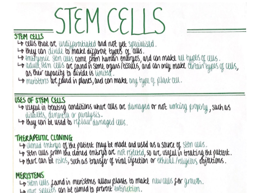 Stem Cells (Cell Biology) Revision Poster [AQA GCSE Biology Double and Triple 9-1]