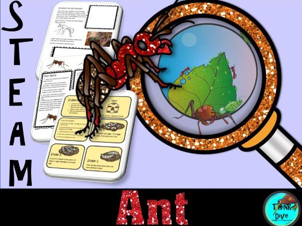 STEAM - Be an Ant Detective - Life Cycle, Biomimicry and Inspiration for Ideas