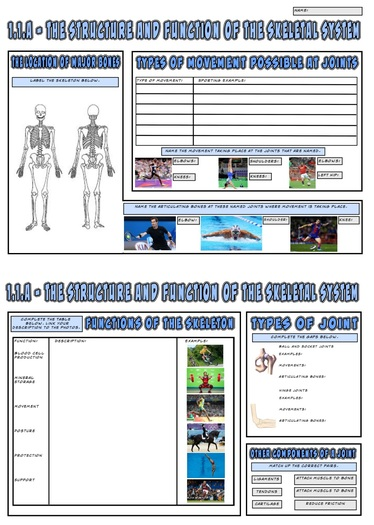 OCR GCSE PE 9-1 (2016) 1.1.a - The Skeletal System A3 Revision Mat/Mindmap