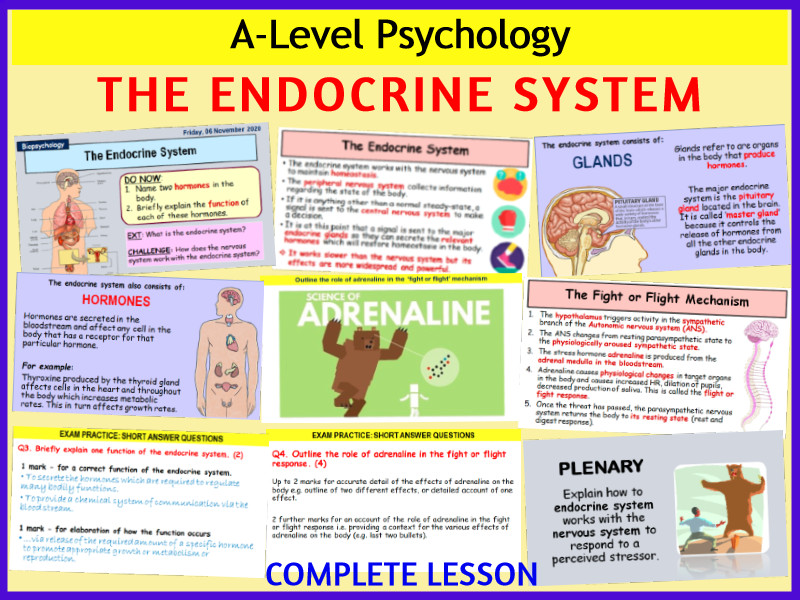 A-Level Psychology - THE ENDOCRINE SYSTEM (Year 2 Biopsychology topic)