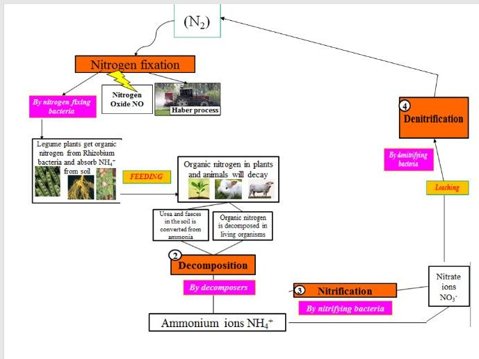 Nitrogen and Water (Nutrient) Cycles