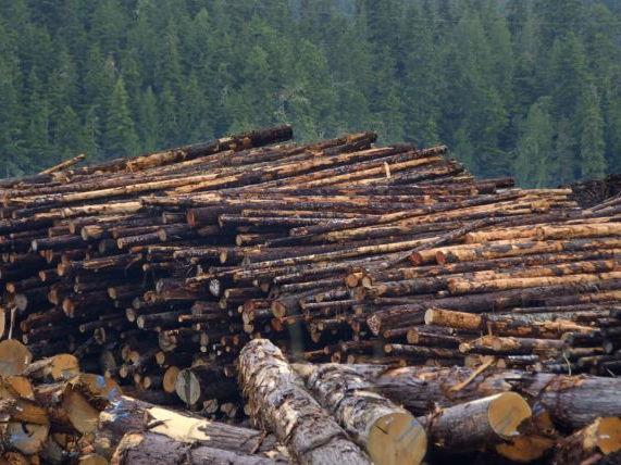 3. Taiga Deforestation Culprits Edexcel B 8.4 a & b