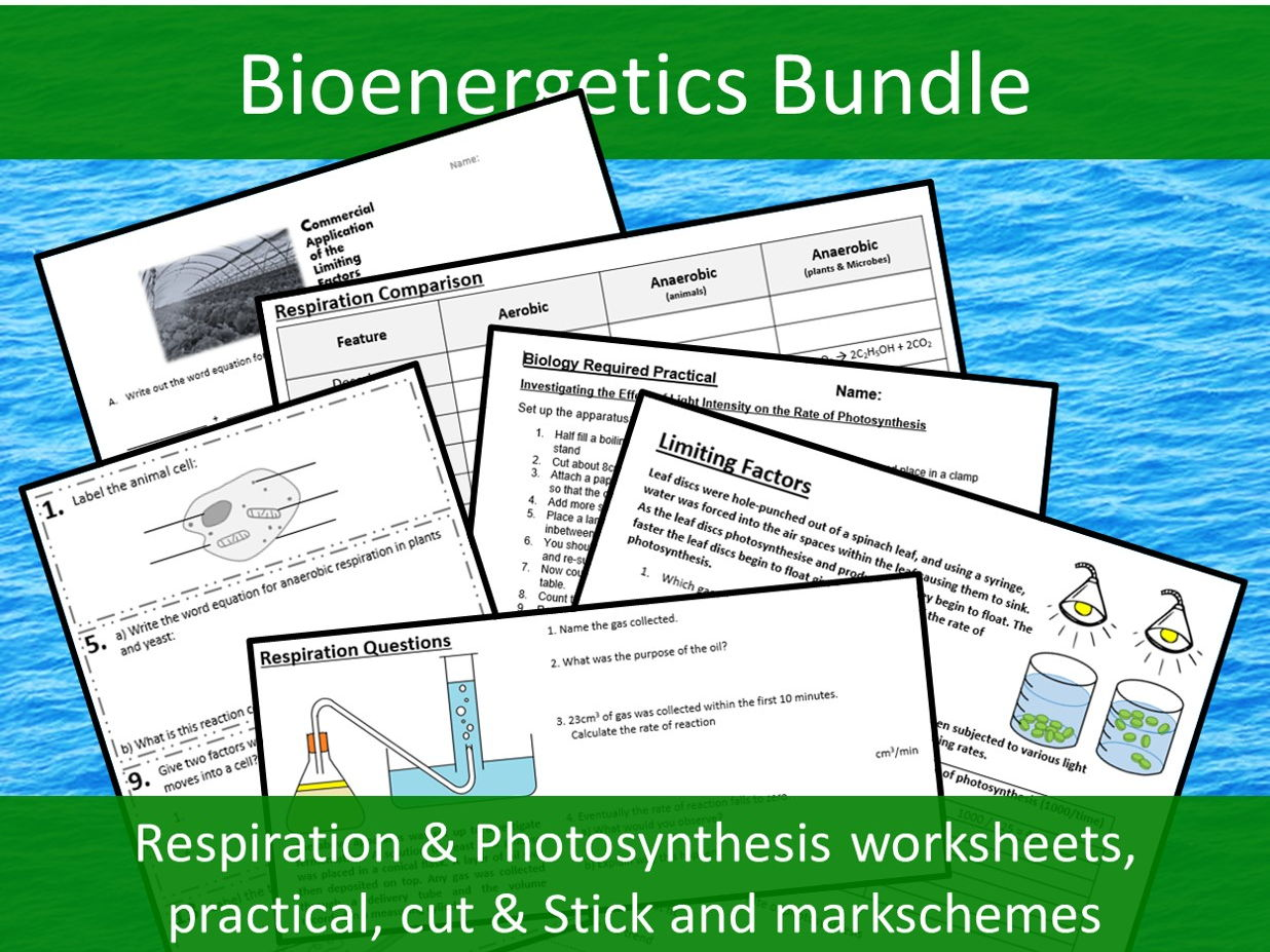 Bioenergetics Bundle - GCSE - Respiration & Photosynthesis