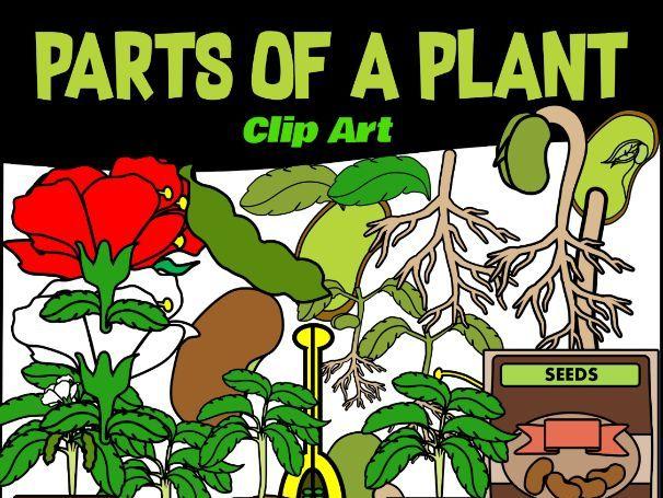 Parts of a Plant Clip Art for Teachers