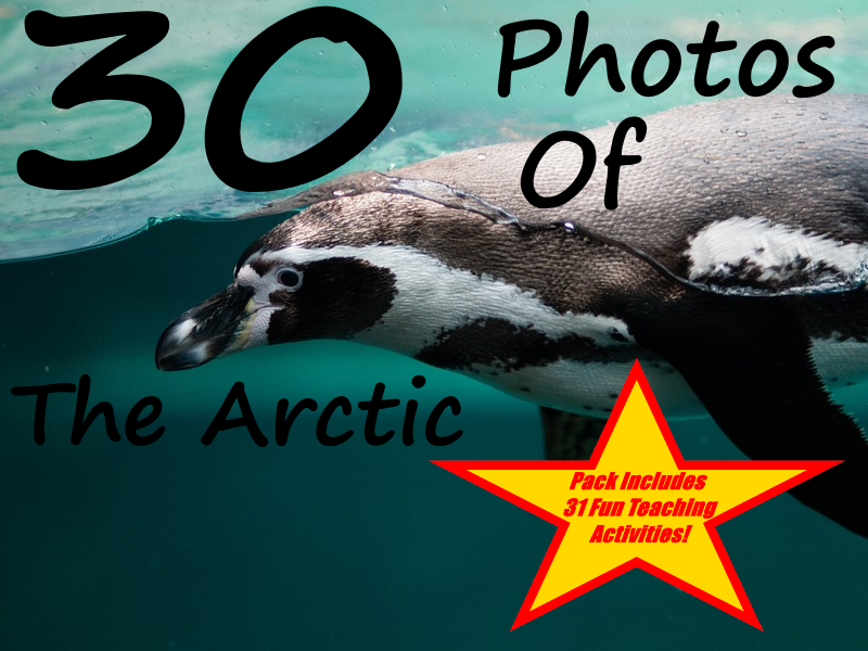 30 Photos Of The Arctic Ocean + 31 Fun Teaching Activities For These Cards