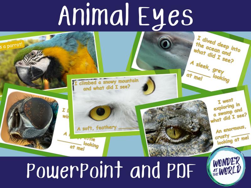 Animal Eyes PowerPoint Activity KS1