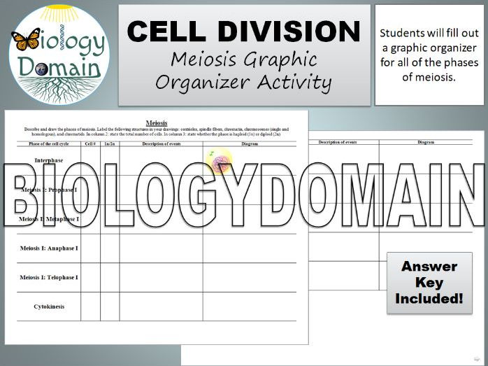 Cell Division: Meiosis Graphic Organizer Activity