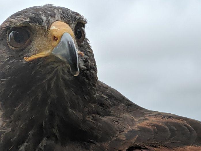 Birds' beaks