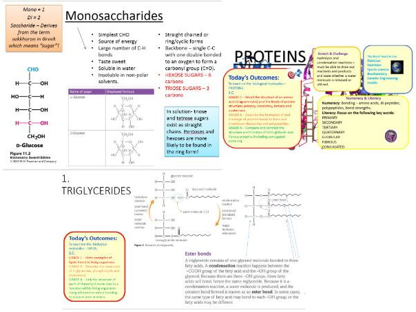 Biology teaching resources Biological molecules – Biological Molecules Worksheet