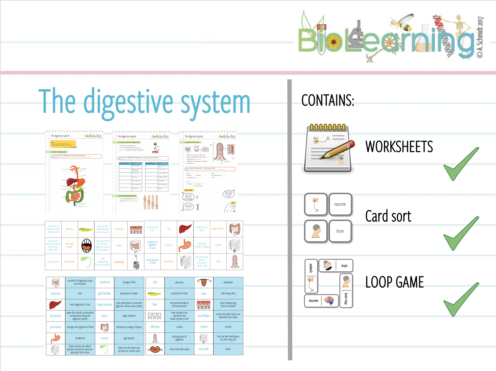 The digestive system - Worksheet, card sort and loop game - 3 resources  (KS3 / KS4)