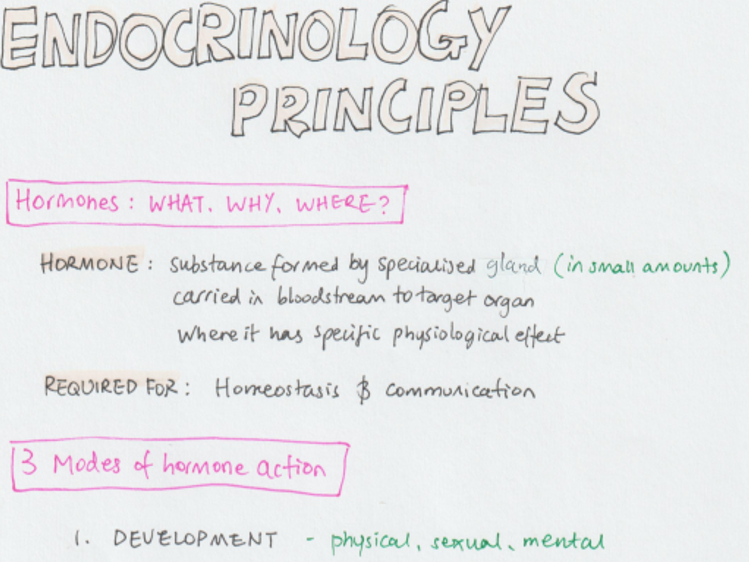 The Endocrine System Notes