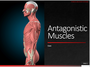 5. Antagonistic Muscles