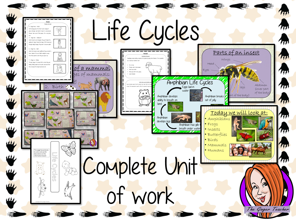 Animal Life Cycles Complete Unit Lesson Bundle
