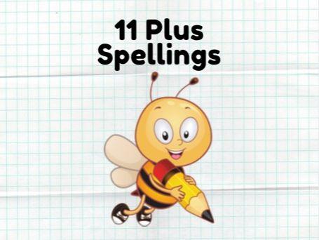 11 Plus Spellings