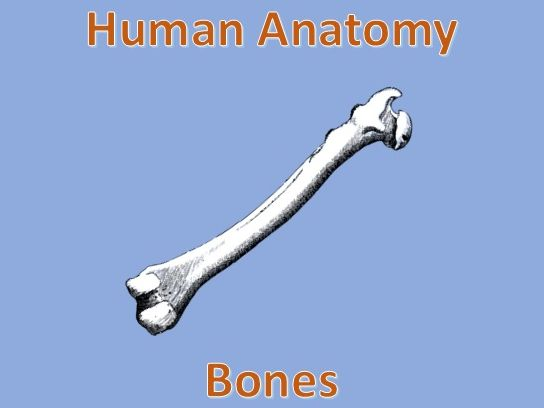 Human Anatomy Quiz: Bones