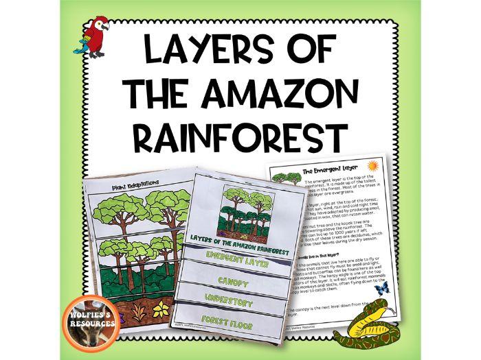 Amazon Rainforest Layers