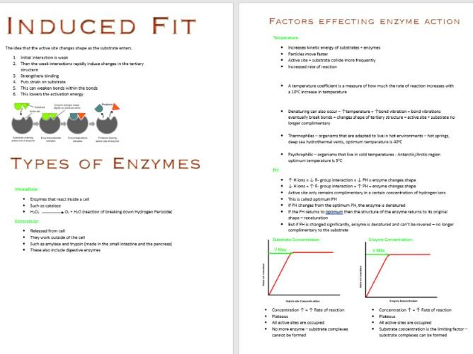 Enzymes Booklet AS Biology OCR