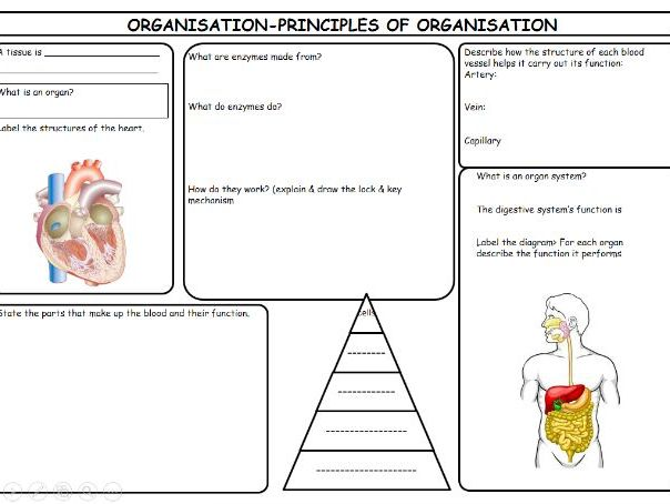 New GCSE AQA Biology 4.2 Organisation Revision pack