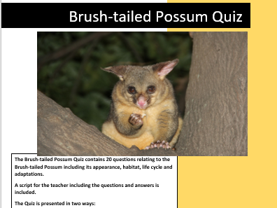 Science: Living things and their Habitats: Brush-tailed Possum Quiz